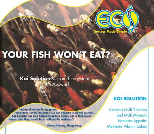 Koi-Solution