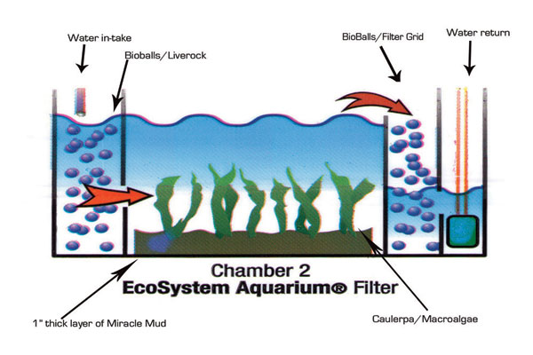 Miracle mud exchange ecosystem aquarium for How to set up a fish tank filter